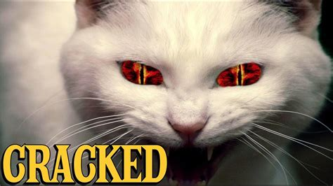 6 scientific findings that prove cats are evil youtube