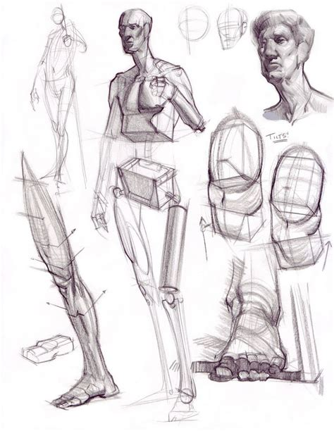 figure drawing pin by character design references on character anatomy