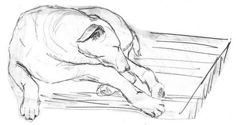 doodle hewan tutorial cara membuat doodle bagi pemula
