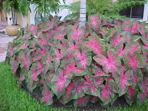 colorful shade plants shade plants captain s lawns landscaping inc
