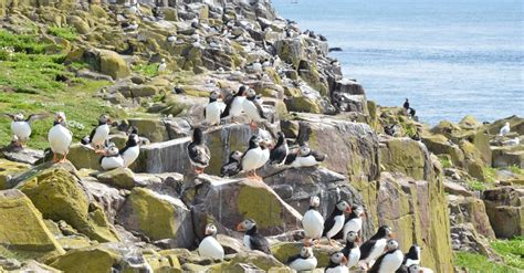 boat jobs near me your guide to farne islands boat trips