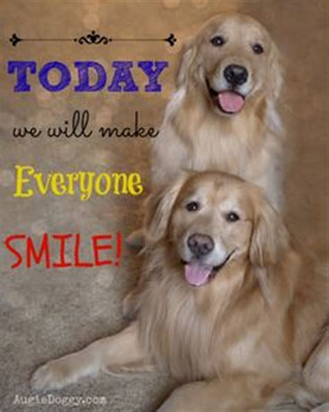 by good morning golden retriever 1000 images about golden retriever dog quotes on