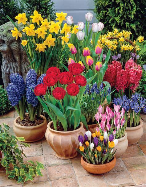 blumen und pflanzen fr 252 hjahr ist pflanzzeit welche blumen in balkonk 228 sten