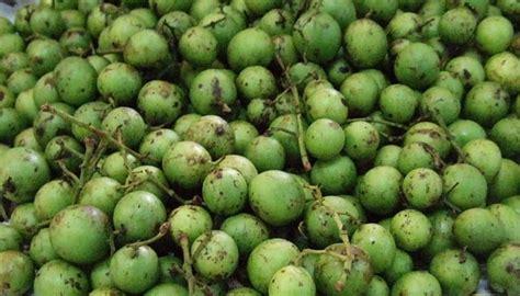 khasiat  manfaat buah gandaria  kesehatan