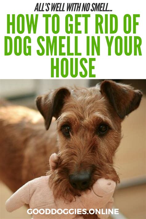 How To Get Rid Of Dog Smell In The House All S Well With No Smell