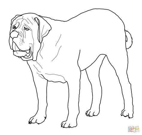 adilt mastiff coloring coloring pages