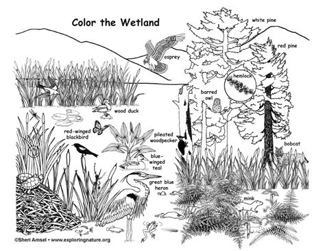 exploring nature coloring pages wetland coloring page