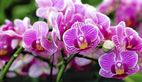 nama nama tanaman hias lengkap beserta gambar
