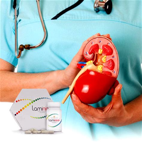 creatine kidney stones doctor s panel how laminine can help with kidney failure