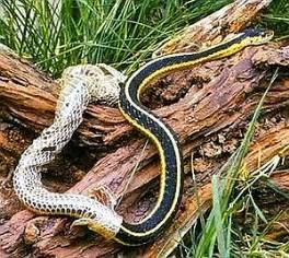 dangerous snakes snake shedding skin