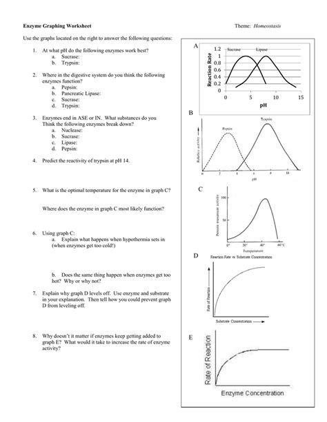 Enzymes Worksheet by Ph And Enzyme Worksheet Answers Deployday