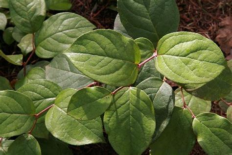 top 28 plants of the northwest edible plants of the