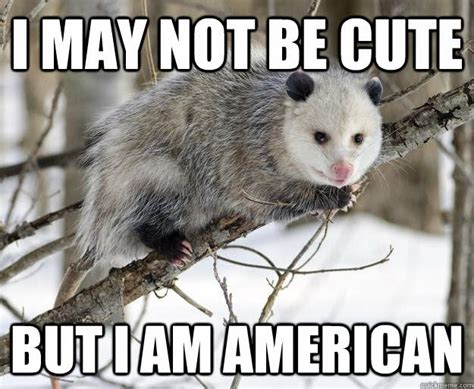 Possum Memes - functional human being