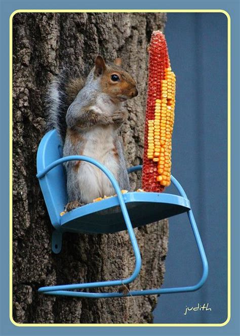 Chair Squirrel Feeder by Small Metal Chair Attached To Tree For Squirrel Feeder