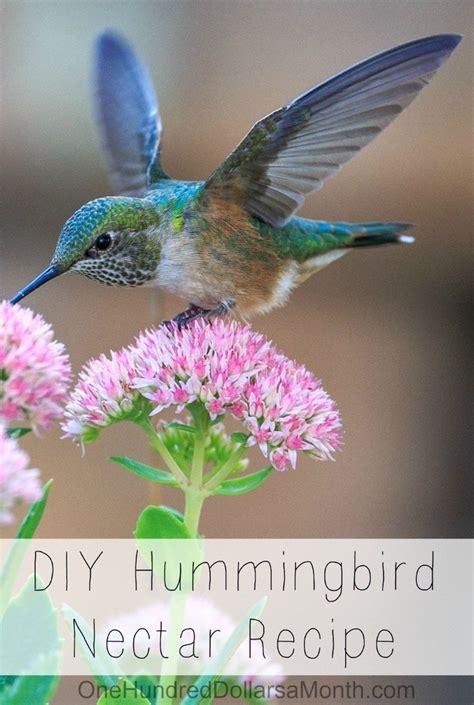 diy hummingbird nectar recipe hummingbird nectar recipe