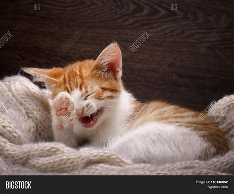 8 Ways To A Laugh At Your Cats Expense by Cat Laughing Portrait Image Photo Bigstock
