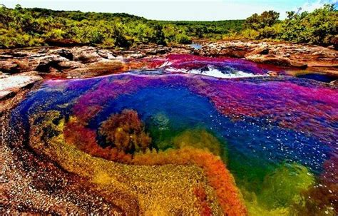 river colors colombia s cano cristas river of 5 colors is a beautiful