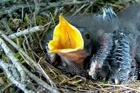 what to feed a baby bird for the best nutrition