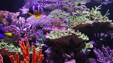 reef with lights saltwater aquarium lighting mad hatter s reef