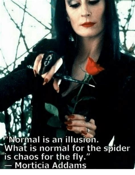 normal is an illusion what is normal for the spider is