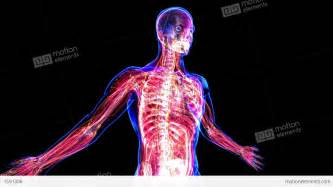 Anatomy of the human body stock animation royalty free