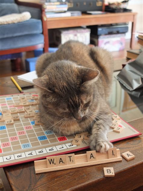 is sog a scrabble word jiji cat and part time student at applewood school