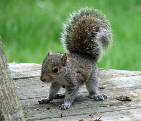 imagenes animales relacionandose 20 peque 241 os animales dan la bienvenida a la primavera