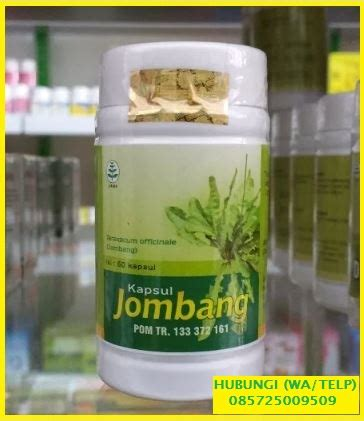 kapsul daun jombang apotik herbal