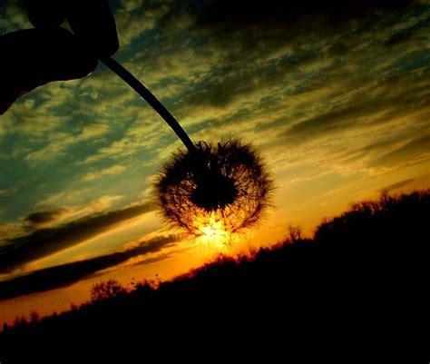 inspiring examples of sunset photography designzzz