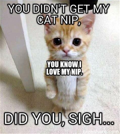 Make Your Own Cat Meme - meme creator create your own meme with our meme creator
