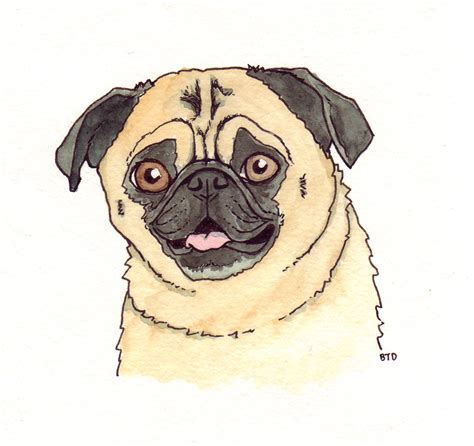 pug drawing image gallery pug drawings