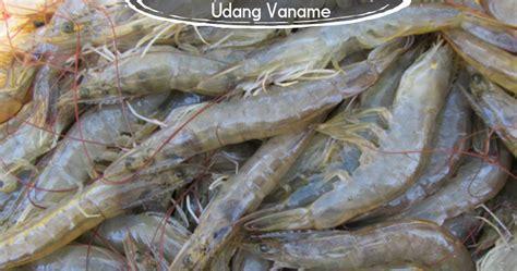 Harga Waring Ikan 2017 cara tepat mudah budidaya udang vaname jual waring