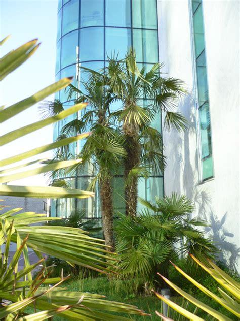 con giardino prato giardino con palme prato progettazione giardini
