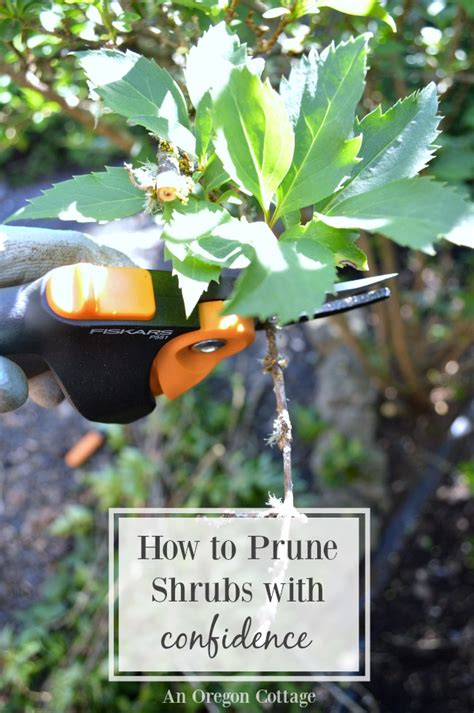 how to prune with confidence garden pruners giveaway