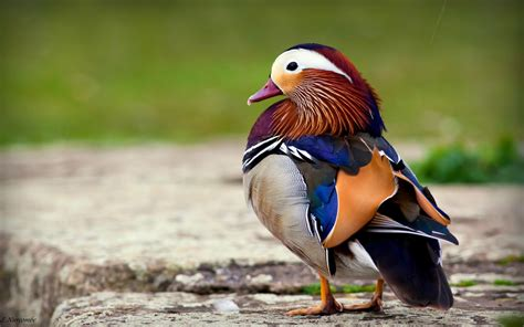beautiful birds phots the gallery of 15 most beautiful birds mostbeautifulthings