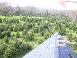 clarks christmas tree farm in tiverton farm fresh ri