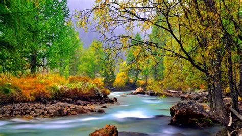 wallpaper river water rocks trees mountain river with rocks rocks yellowed grass evergreen