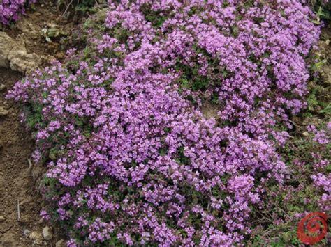 piante fiorite perenni da giardino piante perenni in giardino i consigli per coltivarle 6