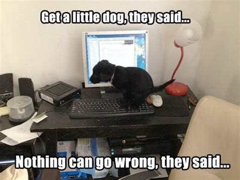 Dog On Computer Meme - crapping puppy it will be fun they said know your meme
