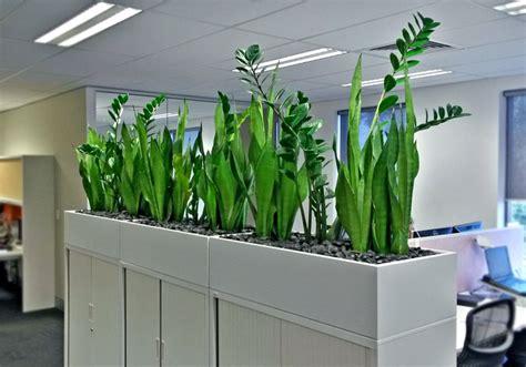 plants broadway plantscapers plants broadway plantscapers