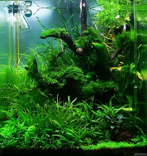 Soil Aquascape wurzelwerk flowgrow aquascape aquarium database