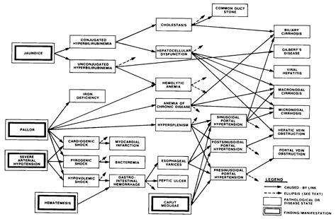 pathophysiology of leptospirosis diagram liver cirrhosis page 213
