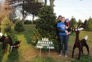 baker s christmas tree farm kentucky christmas tree