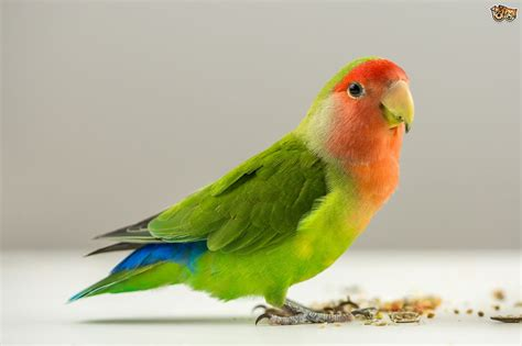 chemicals that are extremely harmful to pet birds pets4homes