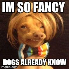 Fancy Dog Meme - fancy dog memes image memes at relatably com