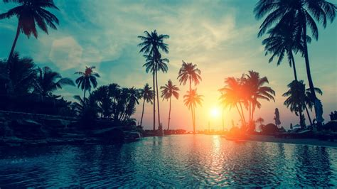 palm tree wallpaper wallpaper sunset palm trees tropical hd nature