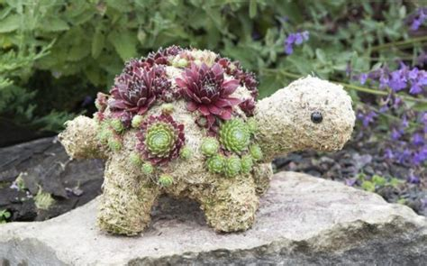 how to make a succulent turtle succulent turtle planter 550 215 343 http lomets