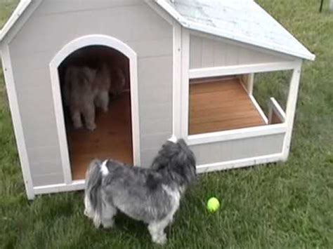 shih tzu dog house precision outback savannah dog house review youtube