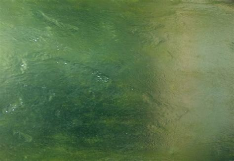 wallpaper jade green green jade surface background free stock photo public