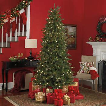 staylit christmas trees sylvania 7 6 quot staylit pre lit artificial twinkling tree from bjs wholesale club for
